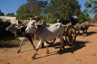 Myanmar_2256