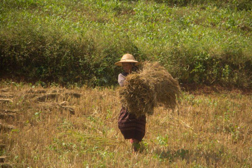 Myanmar_2388