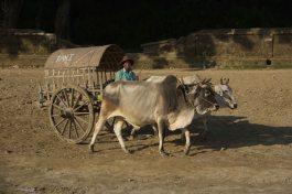 Myanmar_2678