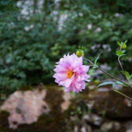 Bhutan-3278