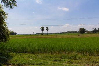 Kambodscha-9032